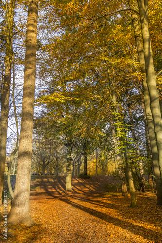 Fotografia, Obraz  Forest during Autumn