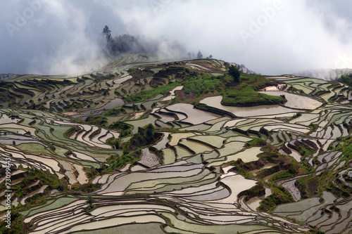 Fotobehang Rijstvelden Terraced rice fields in Yuanyang, China