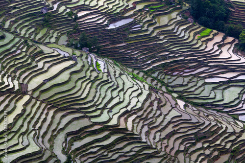 Fotobehang Rijstvelden Terraced rice field in Yuanyang, China