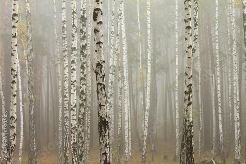 mgla-w-lesie-brzozowym