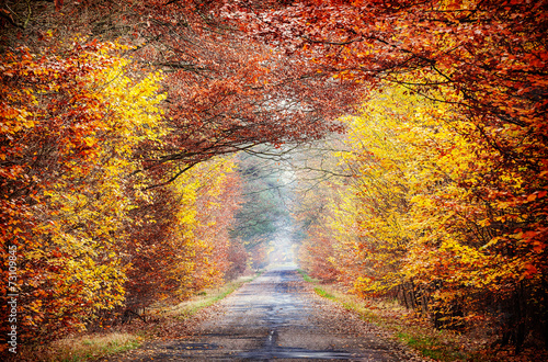 Picture of road in a misty autumnal forest.