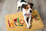 Fototapeta Psy - Cute dog posing on the carpet