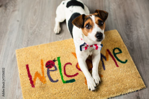 Cute dog posing on the carpet Poster