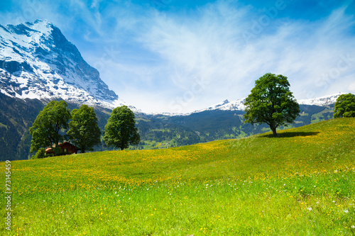 Aluminium Prints Blue Summer nature landscape near Alps