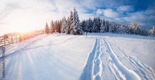 Keuken foto achterwand Bossen Winter landscape
