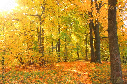 Photo Stands Road in forest Autumn landscape, colorful foliage in the autumn park
