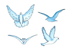 Vector  Series Of Watercolor Drawn Birds