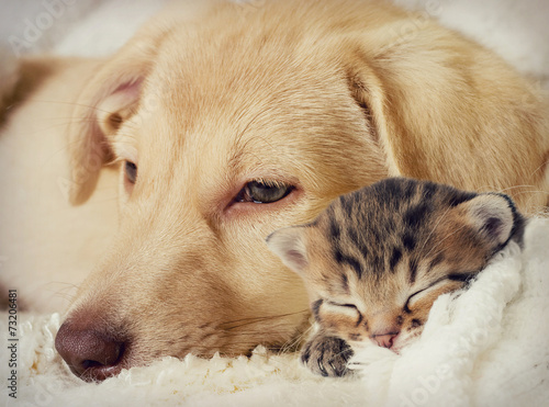 Fototapety, obrazy: Puppy and kitten