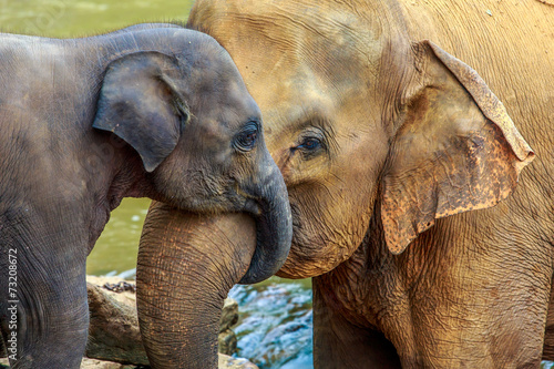 Deurstickers Olifant elephant and baby elephant
