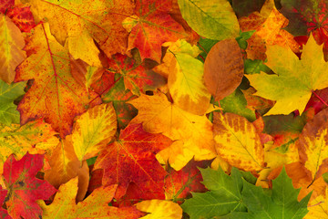 Naklejka na ściany i meble Colorful background made of fallen autumn leaves