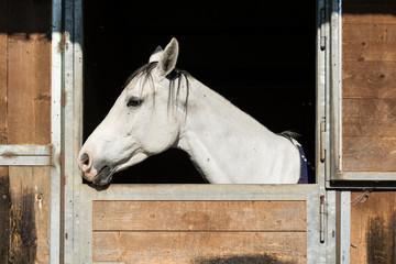 Fototapeta Cavallo