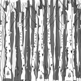 Background of birch trunks