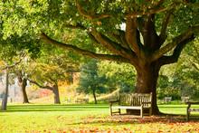 Kew Gardens Park