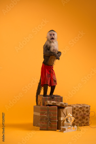 Valokuva  Monkey with Christmas gift boxes