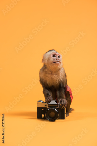 Valokuva  Monkey with retro vintage camera