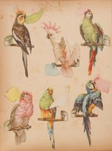 Vintage Parrot Scrap Book Stic...