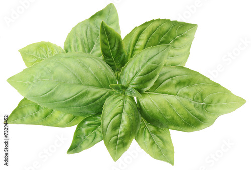 Fotografía  Green basil leaves isolated on a white.