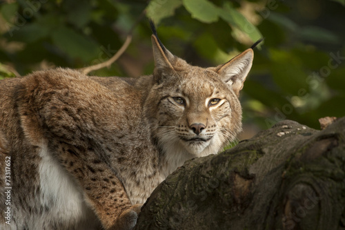 Lynx is klaar om te vertrekken.