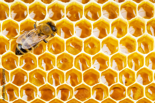 Poster Bee working bee on honeycomb cells