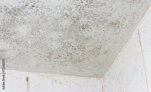 Fotografia, Obraz  ceiling mould mildew