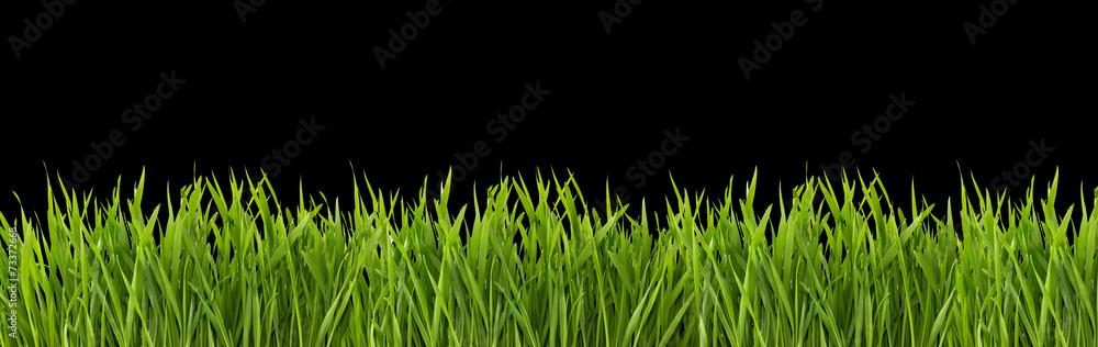 Fototapeta Grass on a black background