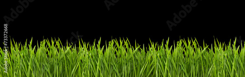 Fototapeta Grass on a black background obraz
