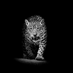 Panel Szklany Popularne Leopard portrait
