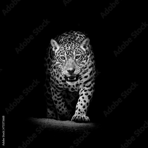 Canvas Prints Bestsellers Leopard portrait