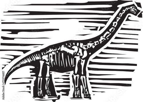 Photo  Apatosaurus Fossil
