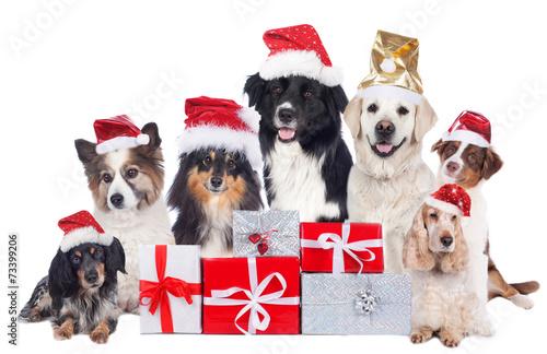 Keuken foto achterwand Kat Hundegruppe mit Weihnachtsmütze und Geschenken