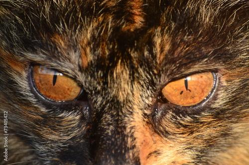 Photo sur Toile Croquis dessinés à la main des animaux Cat spotted with brown eyes