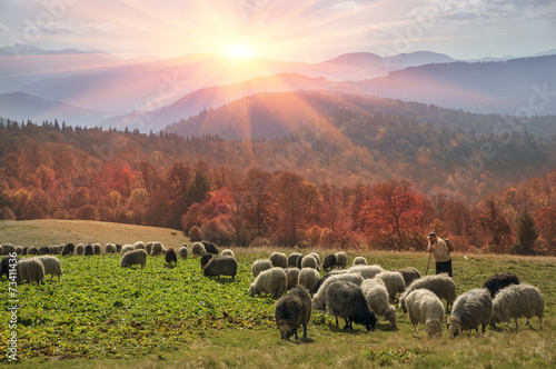 Transcarpathian pastures in autumn Canvas