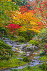 Plakat Fall Colors Meandering Stream Vertical