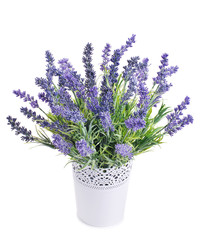 Fototapetapot with lavender isolated on a white