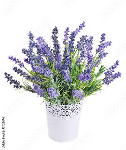 pot with lavender isolated on a white - 73425474