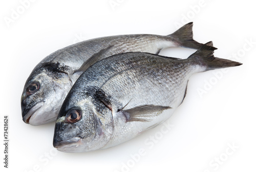 In de dag Vis Dorado fish isolated on white background with clipping path