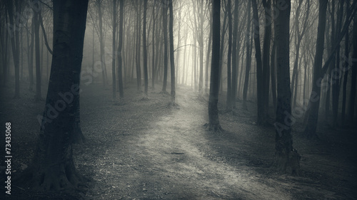 Fotografía  Dark Forest with trail in the fog
