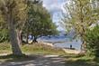 Trees along Sinas beach