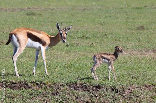 Antelope Gazelle mit Kind