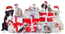 Haustiergruppe An Weihnachten Isoliert