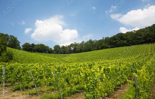 Papiers peints Vignoble Vineyard in Nordrhein-Westfalen, Germany
