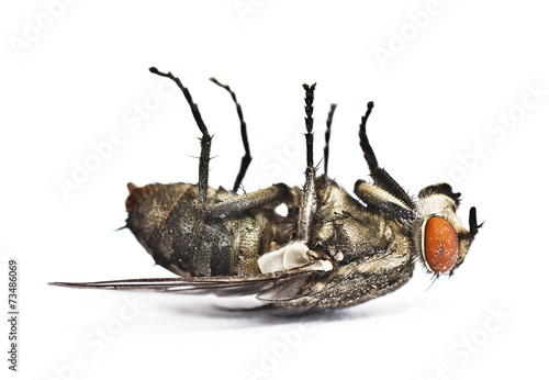 Photo mosca muerta