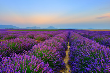 Obraz na Szkle Lawenda Lavender field at sunset