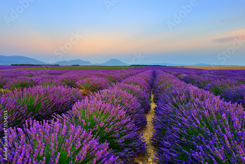 Papiers peints Lavande Lavender field at sunset