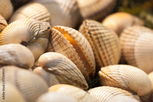 Poster Coquillage Raw clams