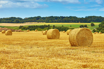 Obraz na Szkle Golden hay bales in countryside