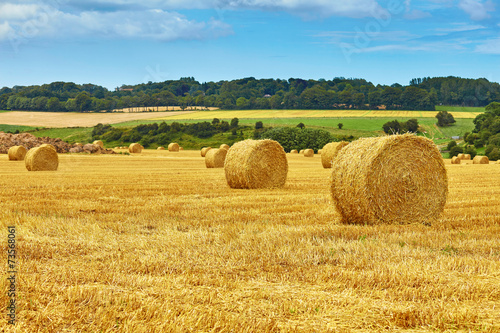 Deurstickers Cultuur Golden hay bales in countryside