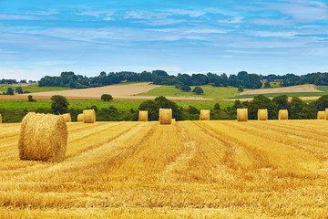 Fototapeta Wiejski Golden hay bales in countryside