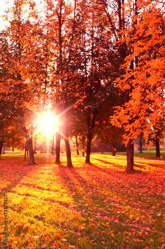 Fototapeta Sunlit Foliage Fall Wallpaper obraz na płótnie