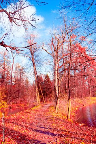 Fotobehang Koraal Park View Woods Landscape